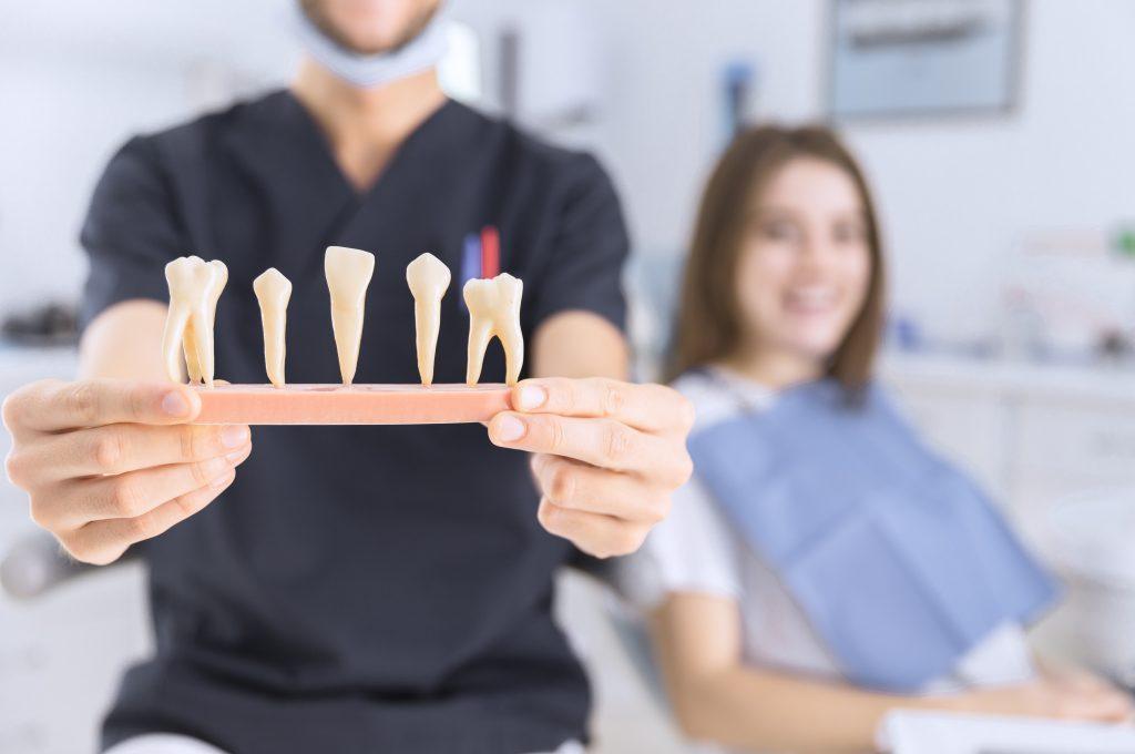 Anatomia dintilor  -Servicii de odontoterapie Clinica Syrodent